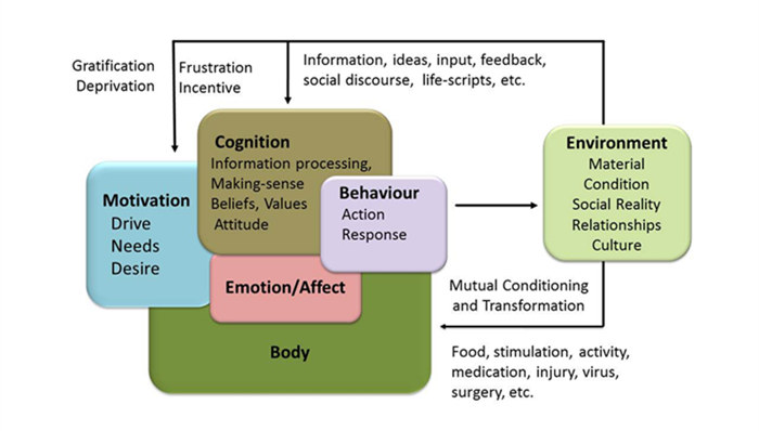 the relationship context of human behaviour and development